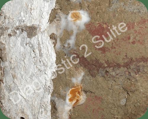 Flambant neuf Expertise et recherche de mérules et champignons des maisons YH69